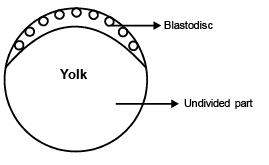 Embryology (Part-4) - Notes, Zoology, Class 12 Class 12 Notes | EduRev