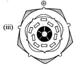 NCERT Exemplar - Morphology of Flowering Plants Notes | EduRev