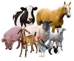 Introduction to Animal Husbandry NEET Notes   EduRev