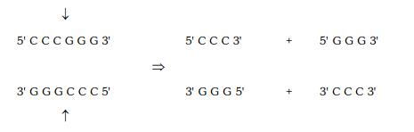 Genetic Engineering : Introduction and Tools NEET Notes | EduRev
