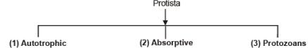 Kingdom Protista : Characteristics