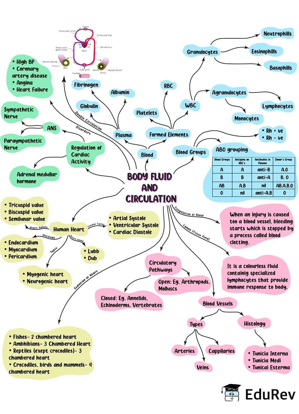 Mind Map: Body Fluids & Circulation Notes | EduRev