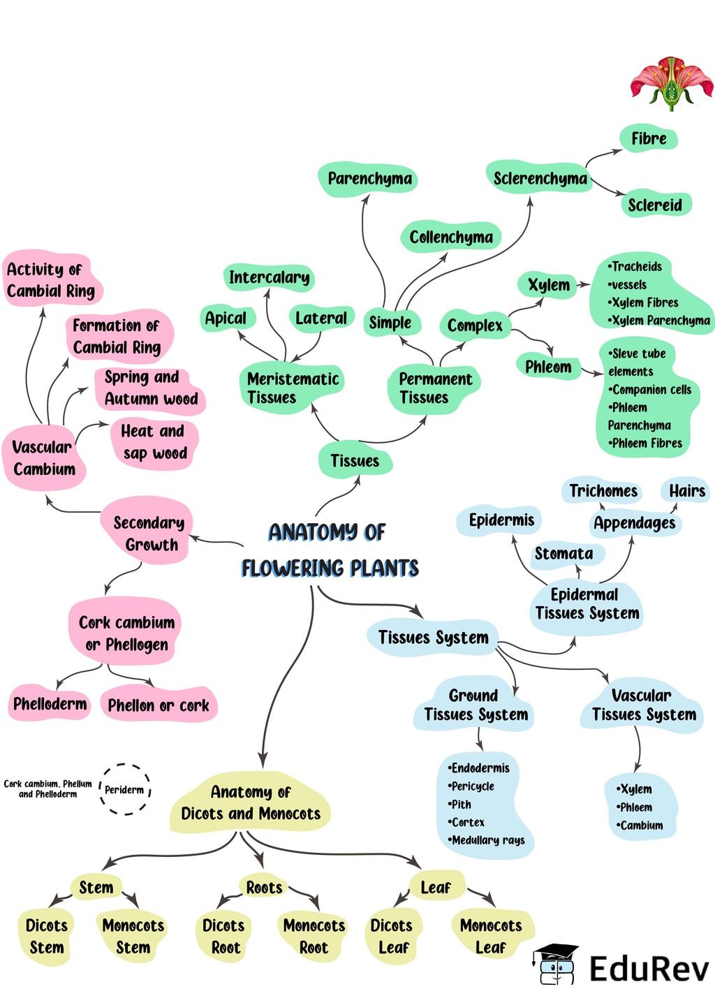 Mind Map: Anatomy of Flowering Plants Notes | EduRev