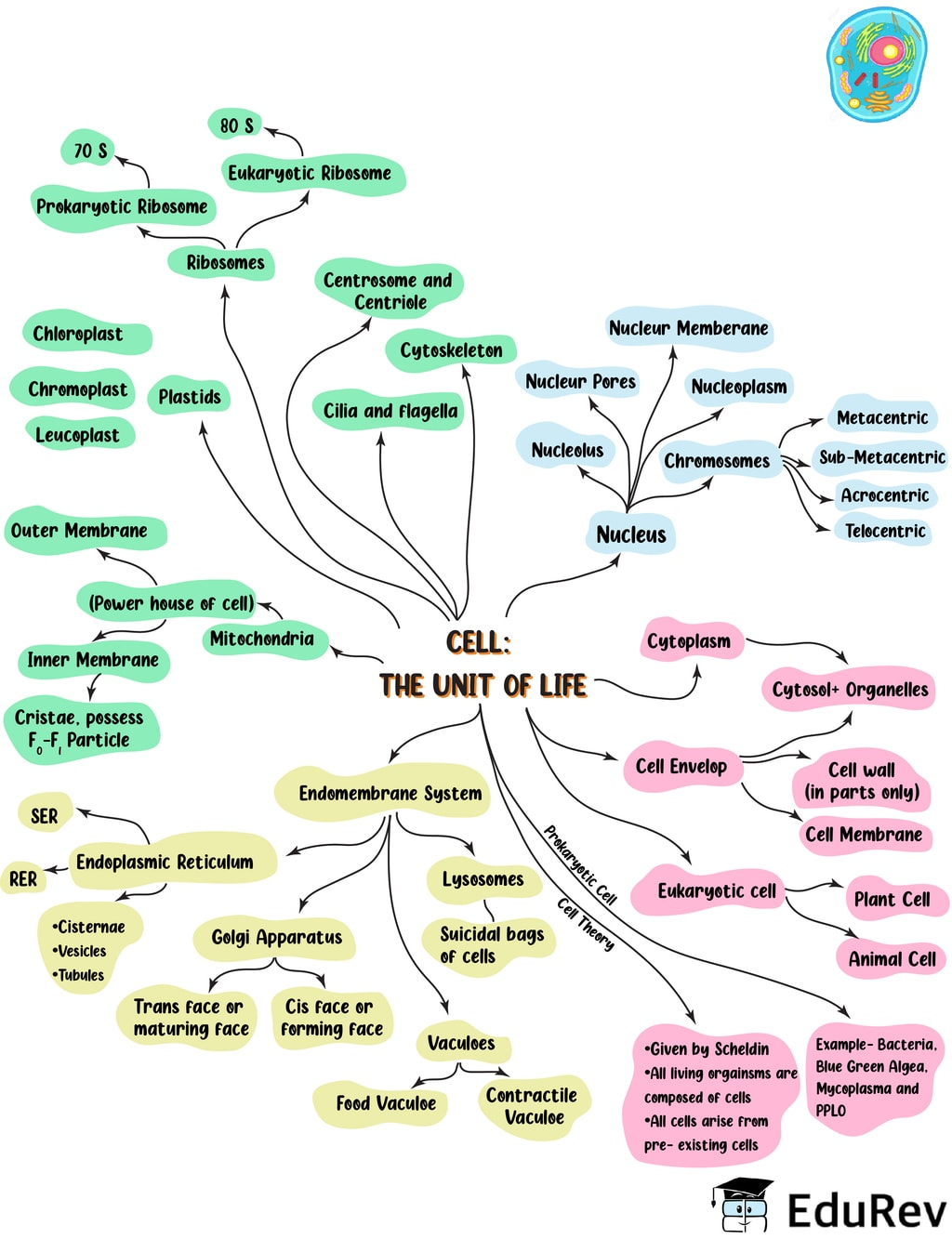 Mind Map: Cell: The Unit of Life Notes | EduRev