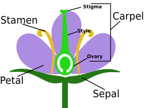 Introduction of Sexual Reproduction in Flowering Plants NEET Notes | EduRev