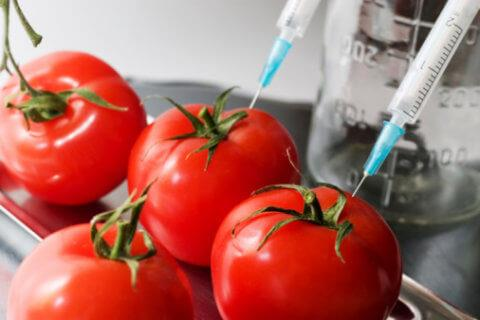 Biotechnological Applications in Agriculture NEET Notes | EduRev
