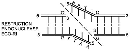 Genetics NEET Notes   EduRev