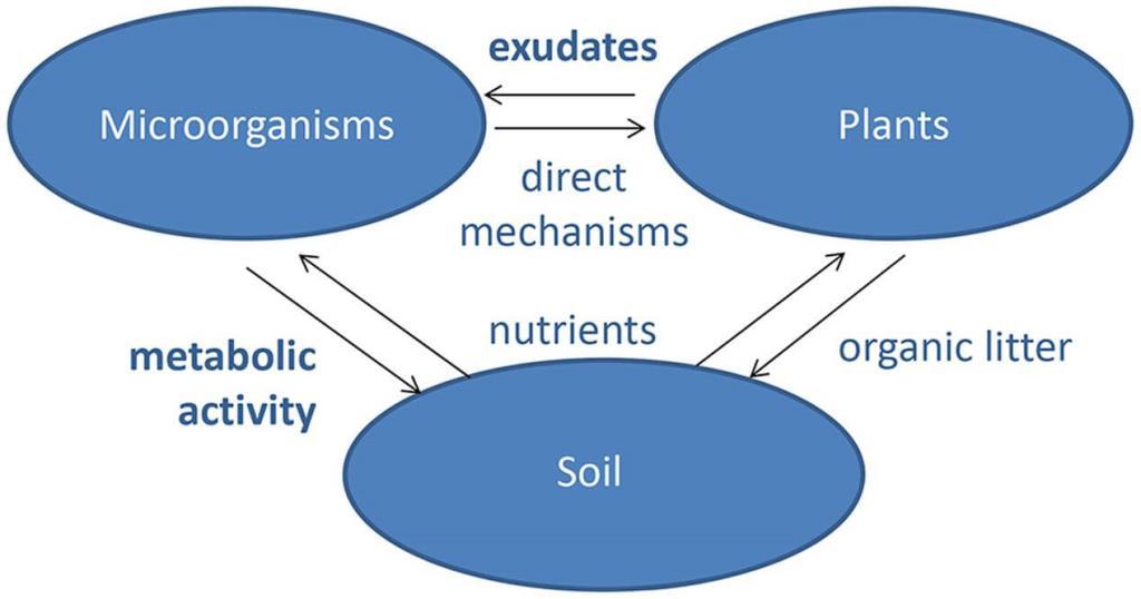 NCERT Solutions- Microbes in Human Welfare NEET Notes | EduRev