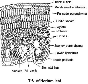 Leaf Anatomy Neet Notes Edurev