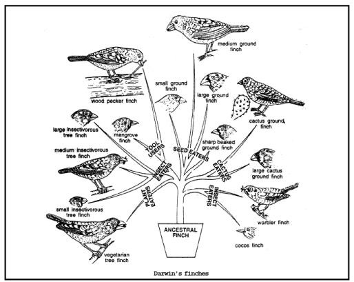 Evidences of Organic Evolution (Part - 3) - Notes, Botany, Class 12 Class 12 Notes | EduRev