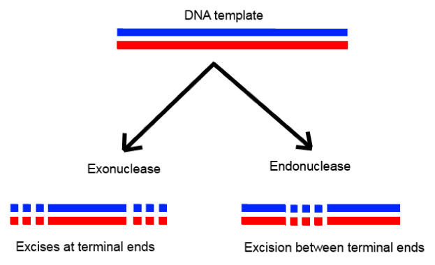 NCERT Solutions - Biotechnology: Principles and Processes NEET Notes | EduRev