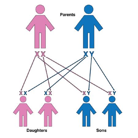 Introduction - Principles of Inheritance and Evolution NEET Notes | EduRev