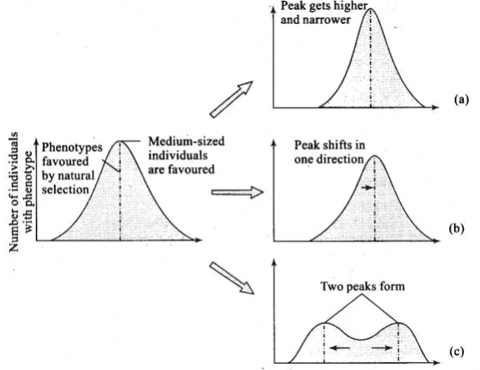 NCERT Exemplar (Part - 1) - Evolution Notes | EduRev