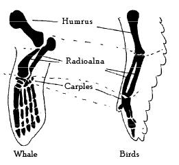 Evidences of Organic Evolution (Part - 2) - Notes, Botany, Class 12 Class 12 Notes | EduRev