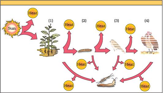 NCERT Exemplar - Ecosystem (Part - 2 ) Notes | EduRev