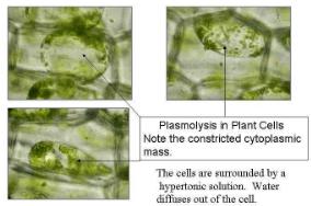 NCERT Solutions - Transport In Plants NEET Notes | EduRev