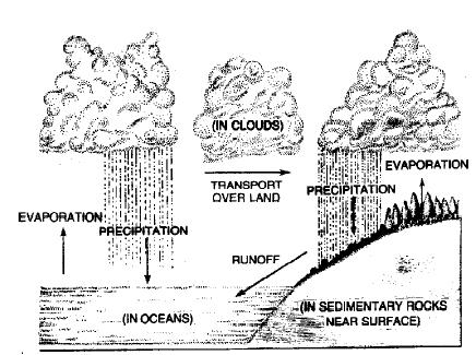 Biogeochemical Cycles NEET Notes | EduRev