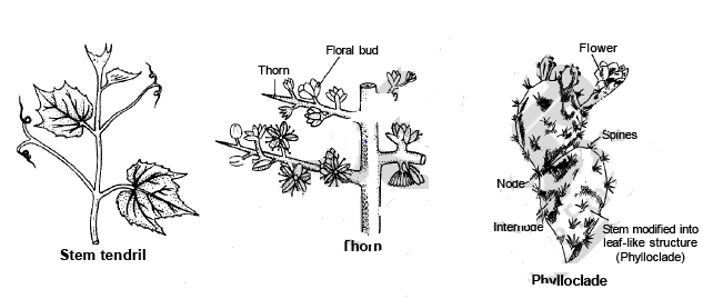 Modification of Root, Stem and Leaf - Morphology of Plants