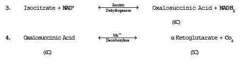 Respiration,CBSE Class 11,Class 11 Biology,Class 11 Botany