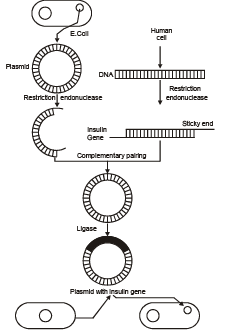Tools of Recombinant DNA Technology: Cloning Vectors NEET Notes | EduRev