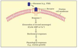 NCERT Exemplars - Chemical Coordination and Integration - 2 Notes | EduRev