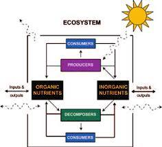 NCERT Solutions- Biodiversity And Conservation NEET Notes | EduRev