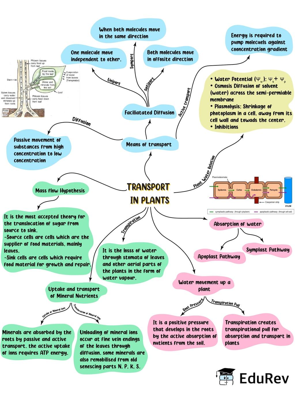 Mind Map: Transport in Plants Notes   EduRev