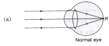 Optical Instruments and Scattering of Light Class 12 Notes | EduRev