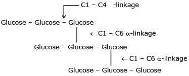 Polysaccharides - Starch,Cellulose and Glycogen Class 12 Notes   EduRev