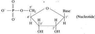 NCERT Exemplar - Biomolecules JEE Notes | EduRev
