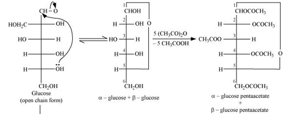 NCERT Solutions - Biomolecules Class 12 Notes | EduRev