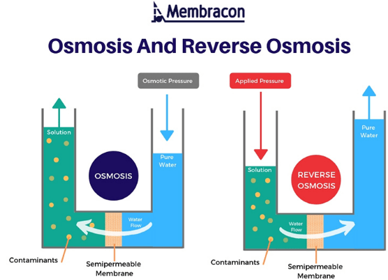 Reverse Osmosis and Water Purification Notes | EduRev