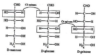 Structure Formulas for Monosaccharides Class 12 Notes   EduRev