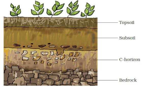 NCERT Exemplar Solutions: Soil Notes   EduRev