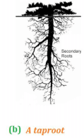 NCERT Solution - Getting to Know Plants Class 6 Notes | EduRev