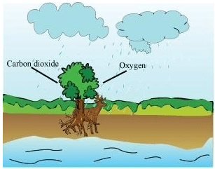 NCERT Solution - Forests:Our Lifeline Class 7 Notes | EduRev