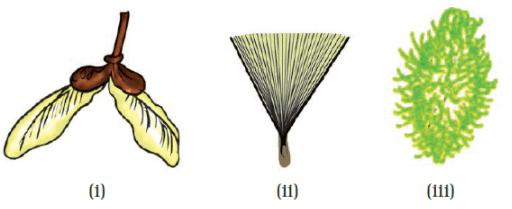 NCERT Exemplar Solutions: Reproduction in Plants Notes | EduRev