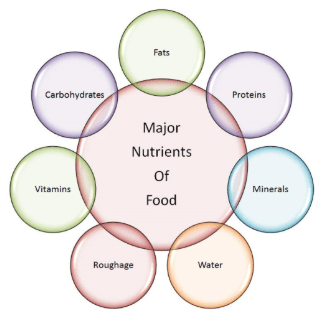 Study Notes (II) - Components of Food, Science, Class 6   EduRev Notes