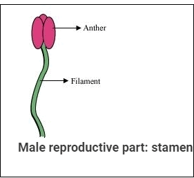 NCERT Solution - Reproduction in Plants Class 7 Notes | EduRev