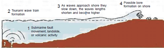 Chapter Notes- Tsunami Class 10 Notes | EduRev