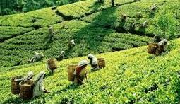 NCERT Solution- Agriculture Class 10 Notes   EduRev