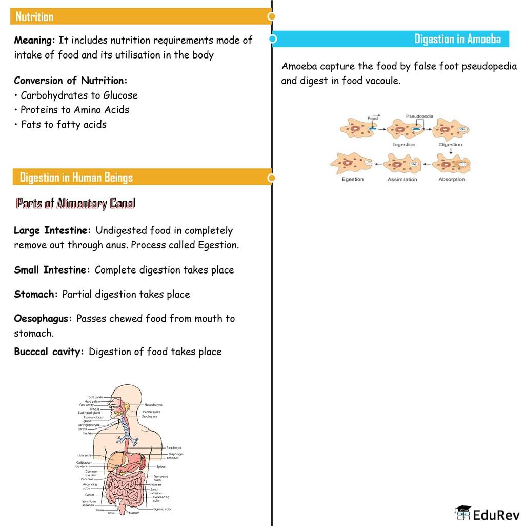 Mindmap: Nutrition in Animals Notes | EduRev