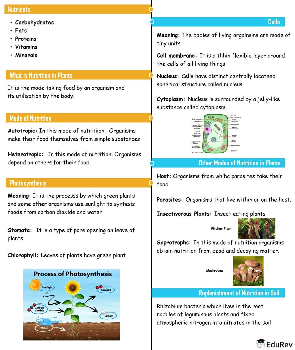 Mindmap: Nutrition in Plants Notes | EduRev