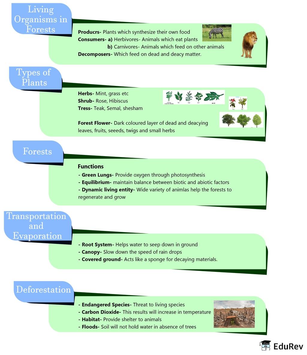 Mindmap: Forest - Our Lifeline Notes   EduRev