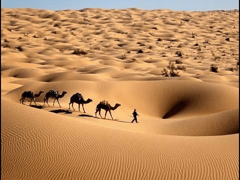 Chapter Notes - Life in the Deserts Class 7 Notes | EduRev