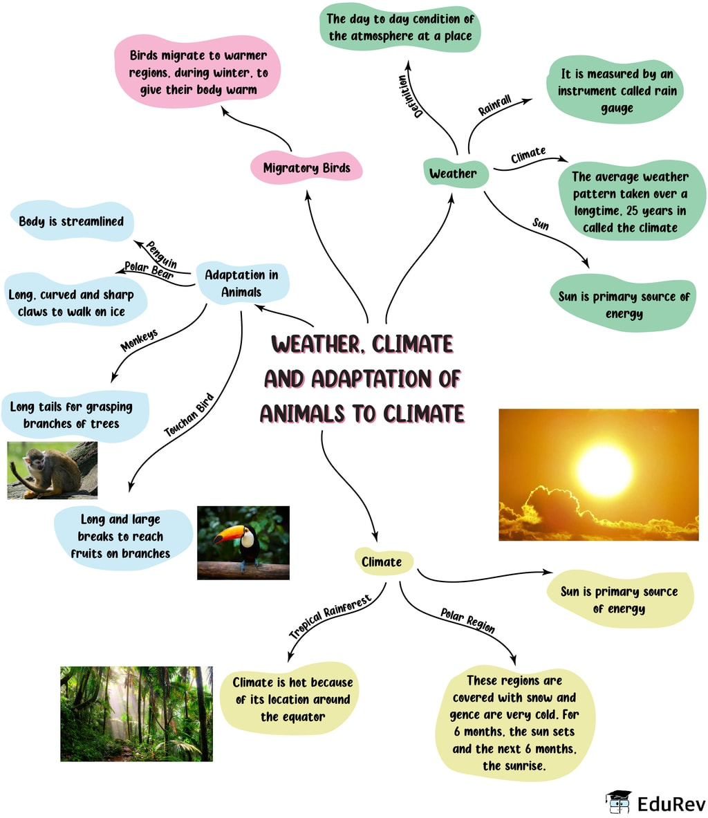 Mindmap: Weather, Climate and Adaptation of Animals to Climate Notes   EduRev