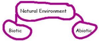 Chapter Notes: Chapter 1 - Environment, SST, Class 7 | EduRev Notes