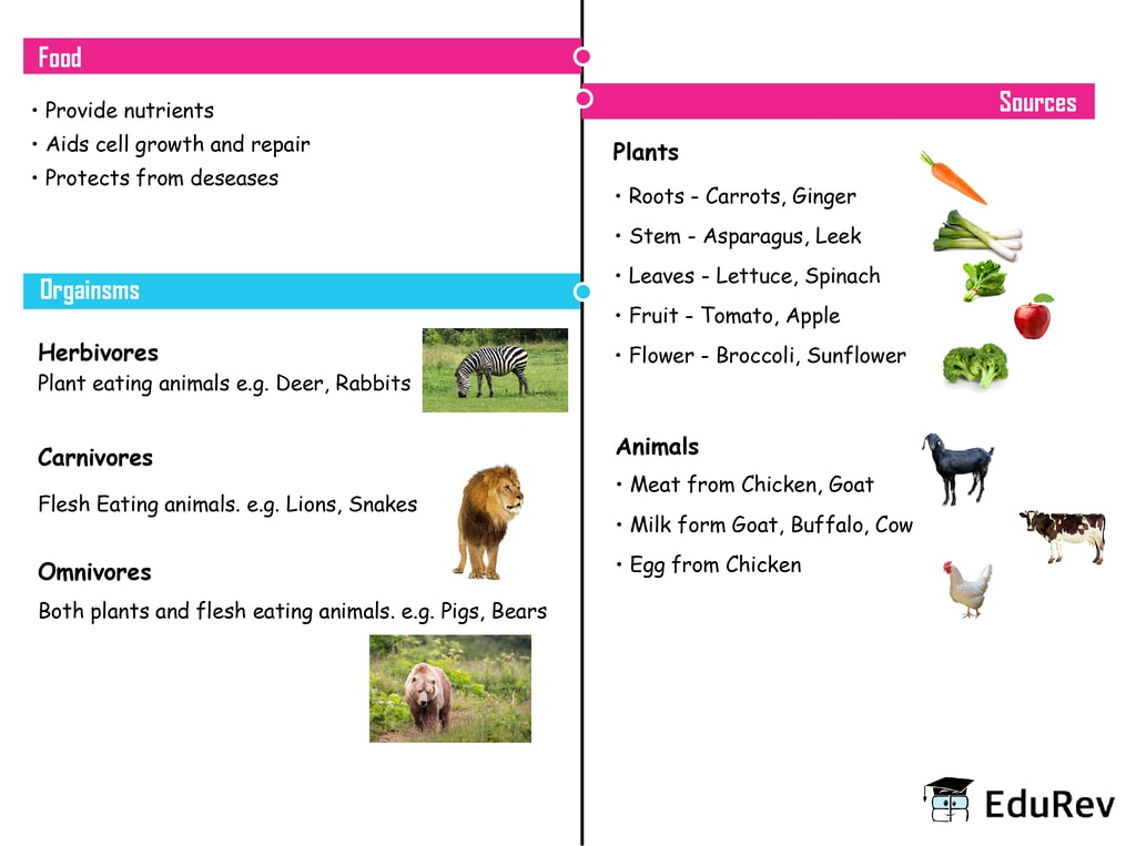 Mindmap: Food : Where Does It Come From? Notes   EduRev