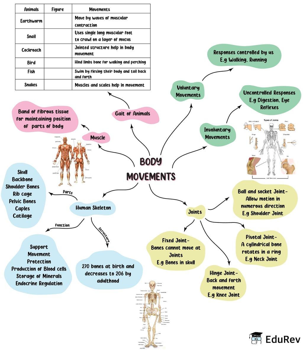 Mindmap: Body Movement Notes | EduRev