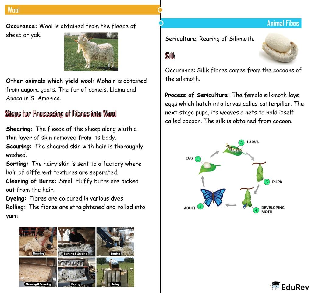 Mindmap: Fibre to Fabric Notes | EduRev